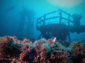 ex HMAS Adelaide