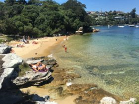 Milk beach on the hermitage walk Rose bay NSW