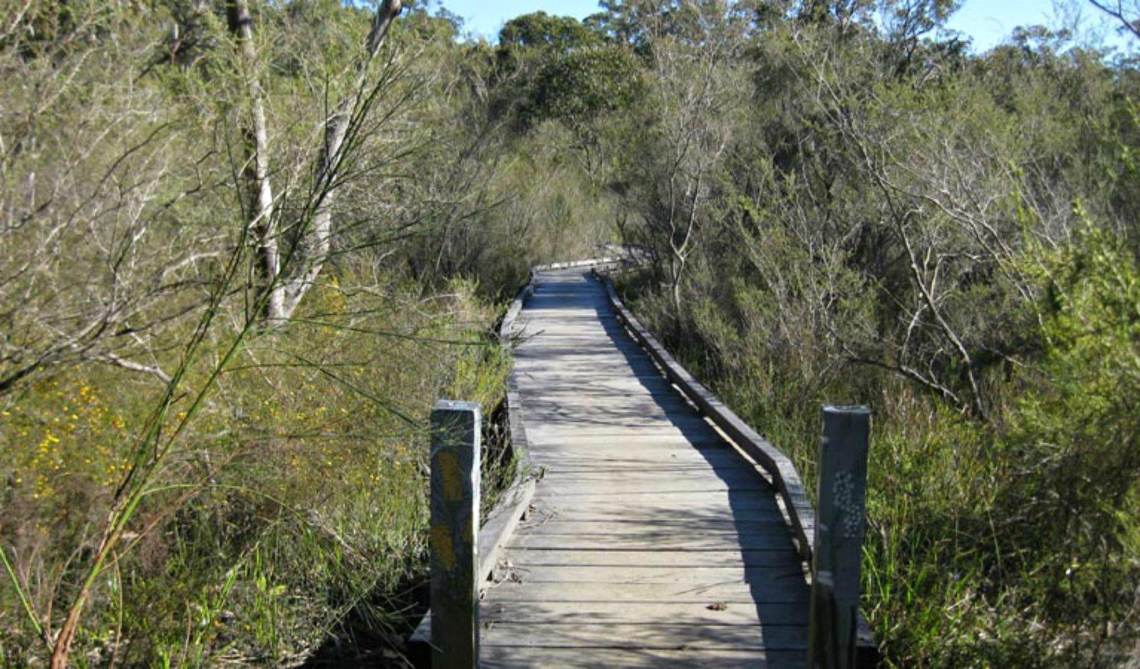 Falcon Crescent boardwalk, Bomaderry Creek Regional Park