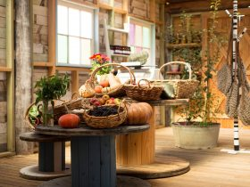 Autumn Vegetables at Farm Shop
