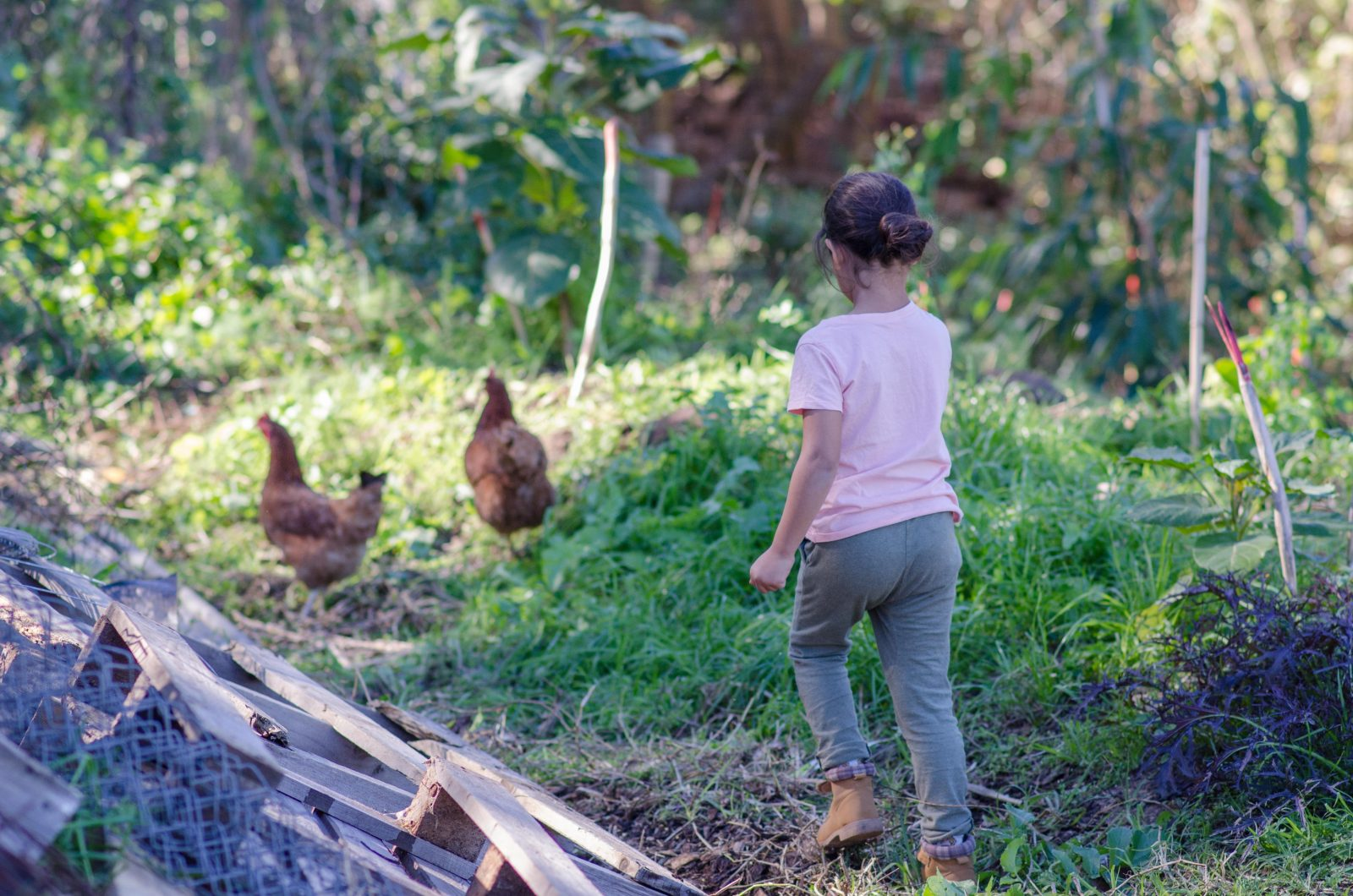 Child chasing chickens on the Green Connect farm