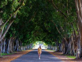 Fig Tree Avenue, Grafton