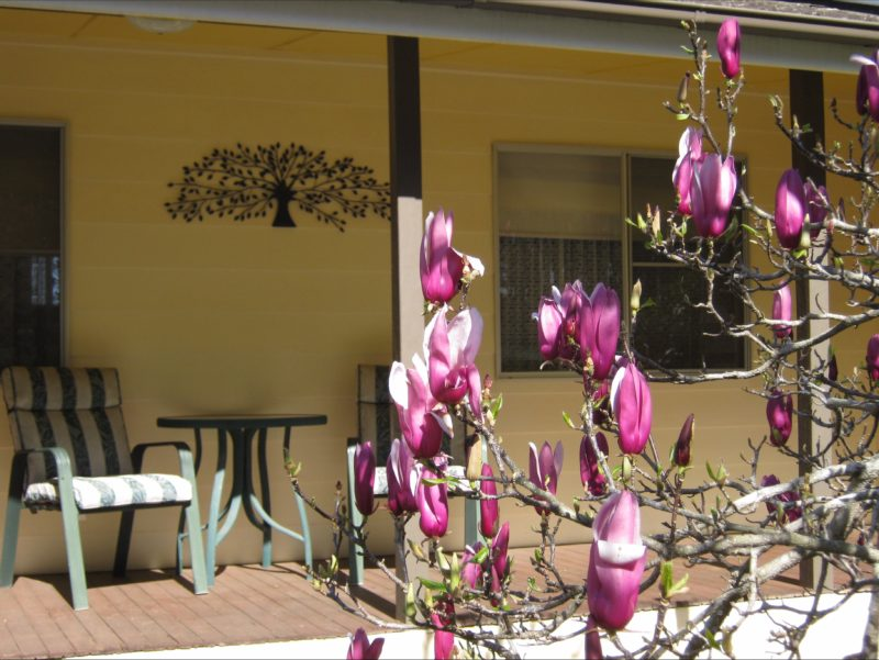 Entrance to Figtree cottage with sunny veranda