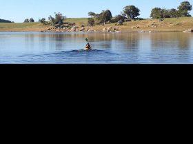 Louise paddling
