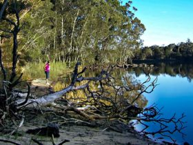 Knappinghat Creek, Five Islands Walking Track. Photo: Kevin Carter/NSW Government.