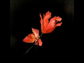 Oil painting Kiama Art Workshops
