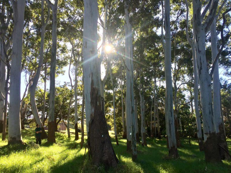 Forest Bathing Walk