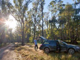Car touring, Murrumbidgee Valley National Park. Photo: David Finnegan/NSW Government
