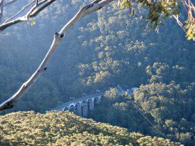 Rainforest and bridge, Illawarra Escarpment State Conservation Area. Photo: NSW Government