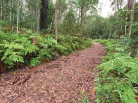 Forest walking track, Gibraltar Range National Park. Photo: Rob Cleary/Seen Australia