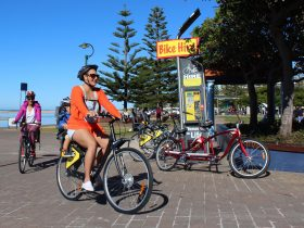 Forster Bike hire