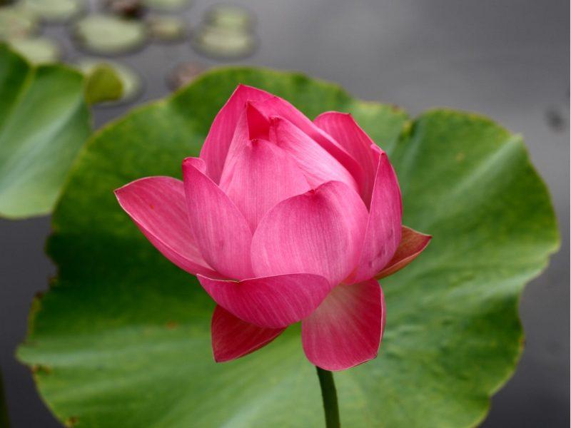 free meditation sydney - sahaja yoga meditation