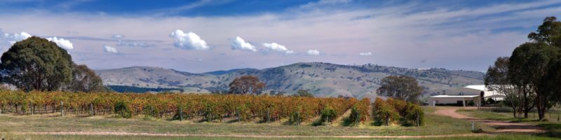 View across Gallagher Wines vines to distant hills