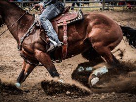 Gil Mathews - Wagga Pro Rodeo