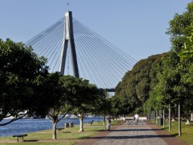 Foreshore walk at Blackwattle Bay Park in Glebe