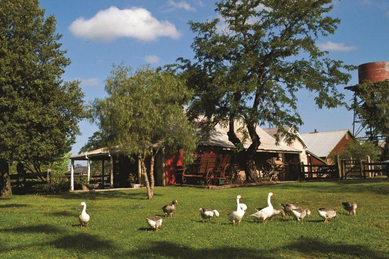 Gledswood Farm Day
