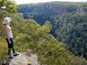 Glenbrook Gorge track, Blue Mountains National Park. Photo: Steve Alton/NSW Government