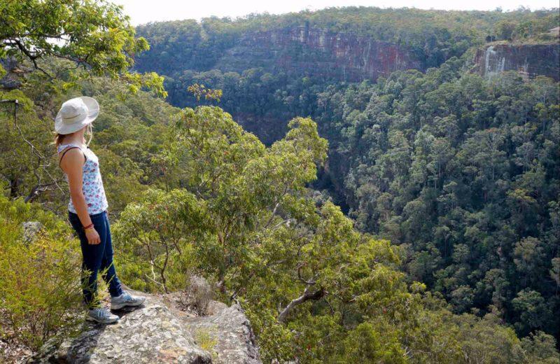 Glenbrook Gorge track, Blue Mountains National Park. Photo: Steve Alton/NSW Government