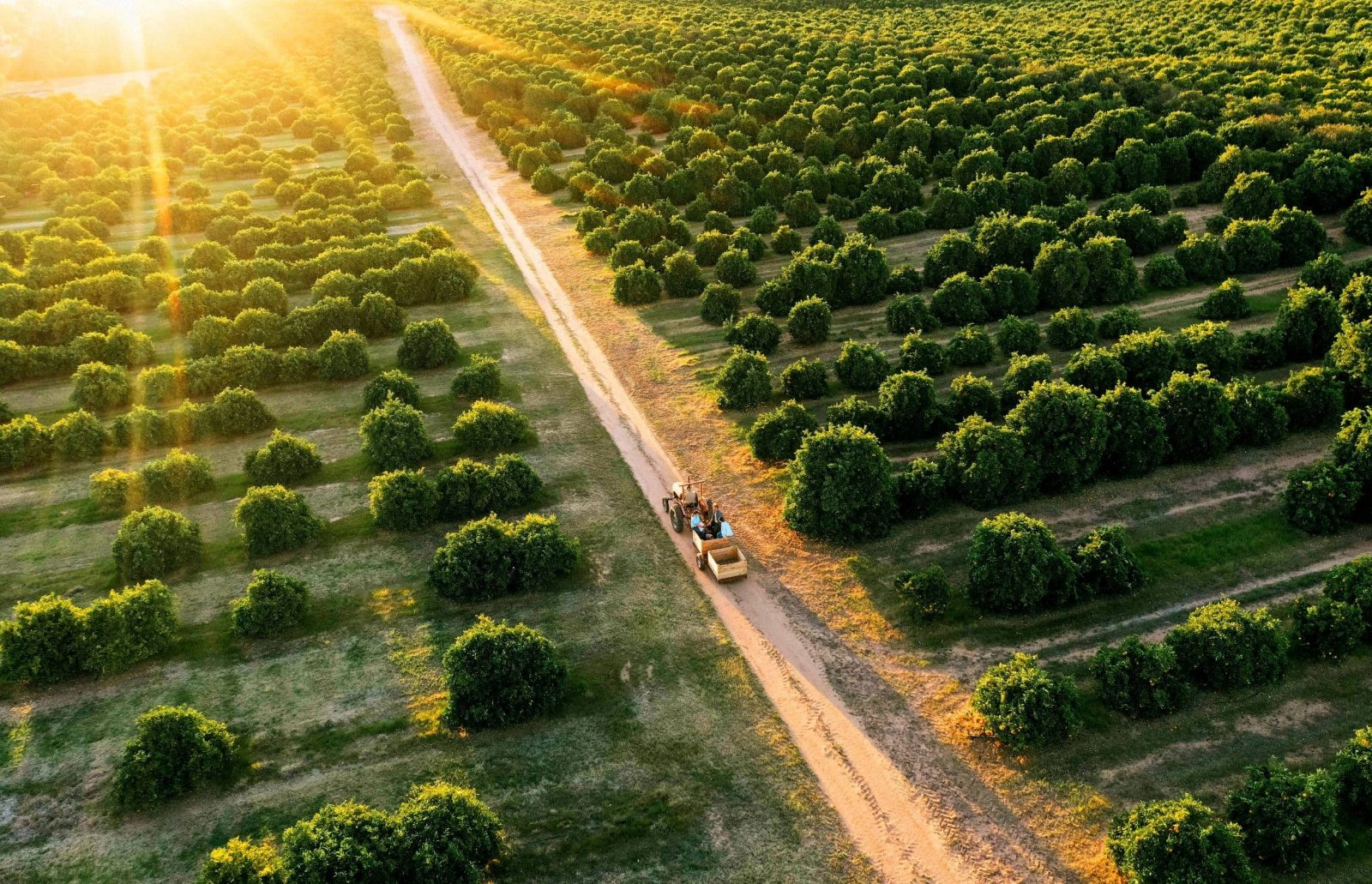 Glendale Citrus and Hazelnut Farm