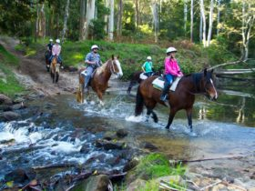 Glenworth Valley Horse Riding