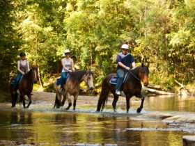 Glenworth Valley Horse Rides