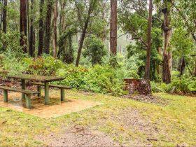 Goodenia Rainforest picnic area