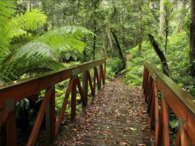 A bridge on the Goodenia Rainforest walk. Photo: John Yurasek