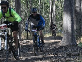 mountain biking event, mountain biking recreational, grafton cycling,