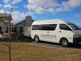 Grape Vine Tours