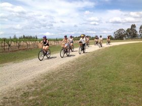 Grapemobile Bicycle Hire Hunter Valley Vineyards