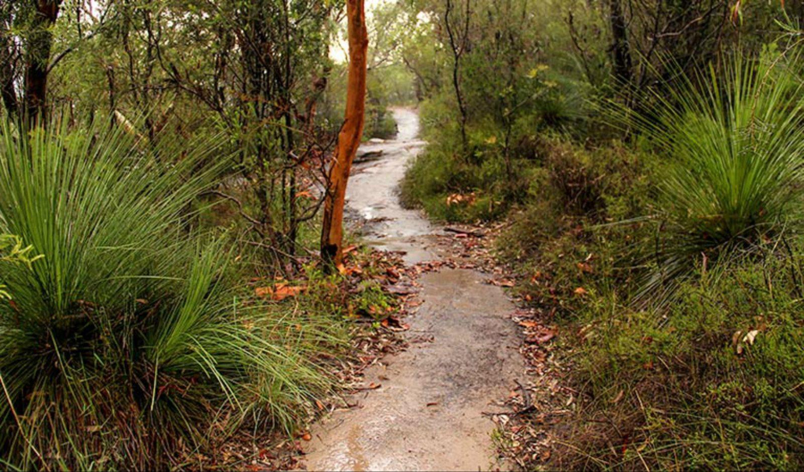 Great North walk - Brisbane Water National Park