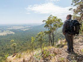 Great North walk - Watagans National Park