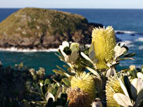 Native plants with ocean and island in the distance. Photo: Stuart Poignard