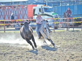 Gresford Rodeo
