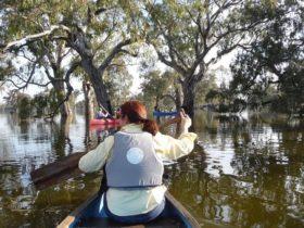 Gum Swamp Canoeing