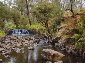 Gummi Falls campground, Barrington Tops National Park. Photo: John Spencer/NSW Government