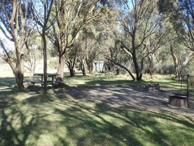 Picnic tables and fire rings among black sallee trees, Gungarlin River campground, Kosciuszko Nation