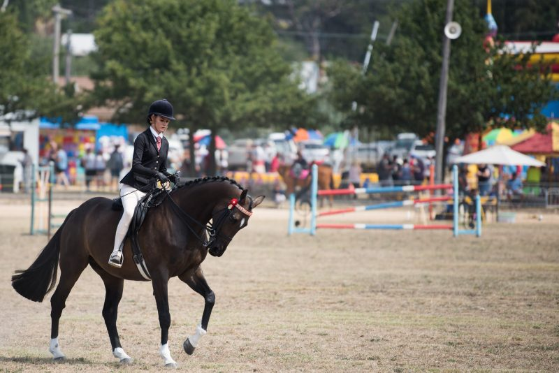 Horse competitions @ the Gunning Show