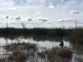 The Gwydir Wetlands photo courtesy of Tourism Moree Inc