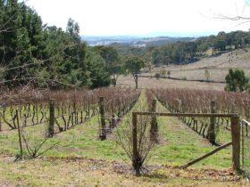Habitat Vineyard