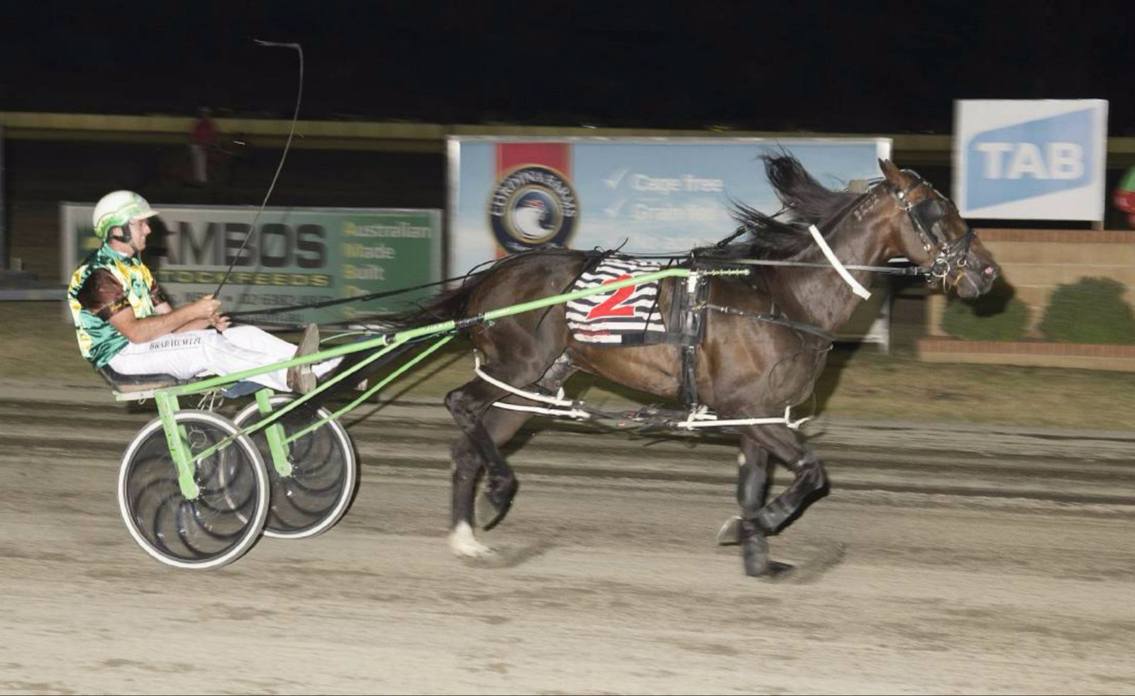 Young Harness racing