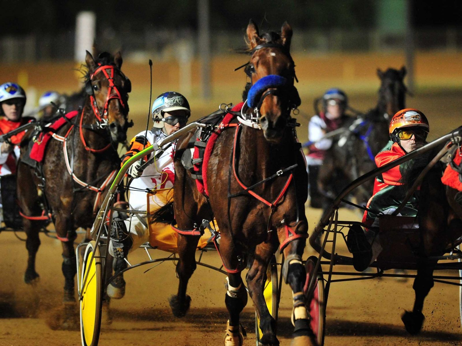 Group of Harness Racing horses