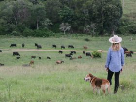 A young girl and her dog standing on a hill looking at the farm cattle herd