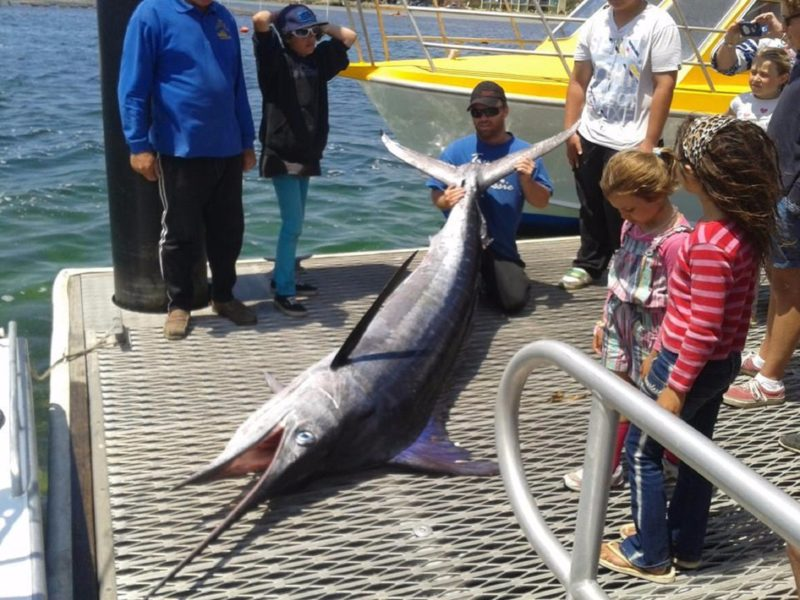 Headland Fishing Charters Merimbula