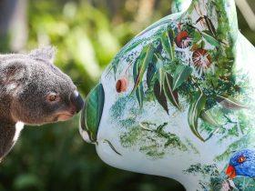 Hello Koalas Festival