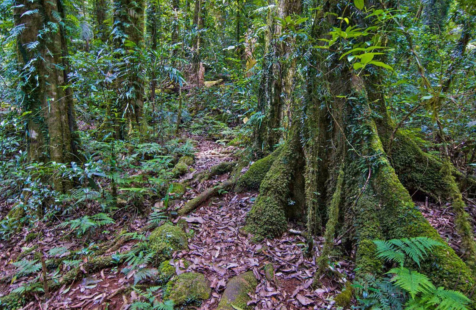 Helmholtzia loop walking track, Border Ranges National Park. Photo: John Spencer