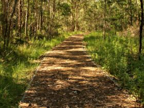 Heritage walking track, Blue Gum Hills Regional Park. Photo: John Yurasek