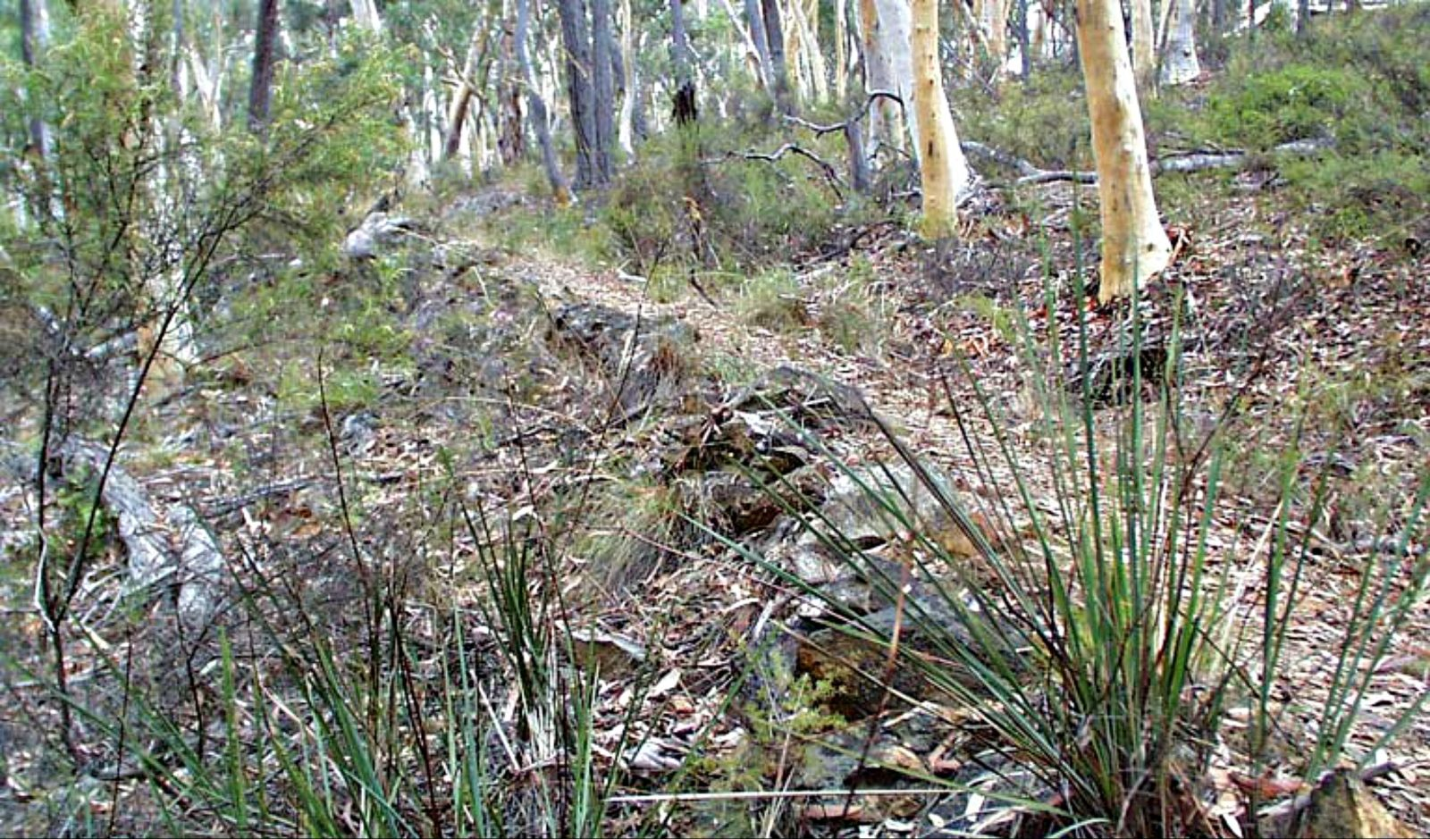 Historic Water Race walking track, Mullion Range State Conservation Area. Photo: NSW Government