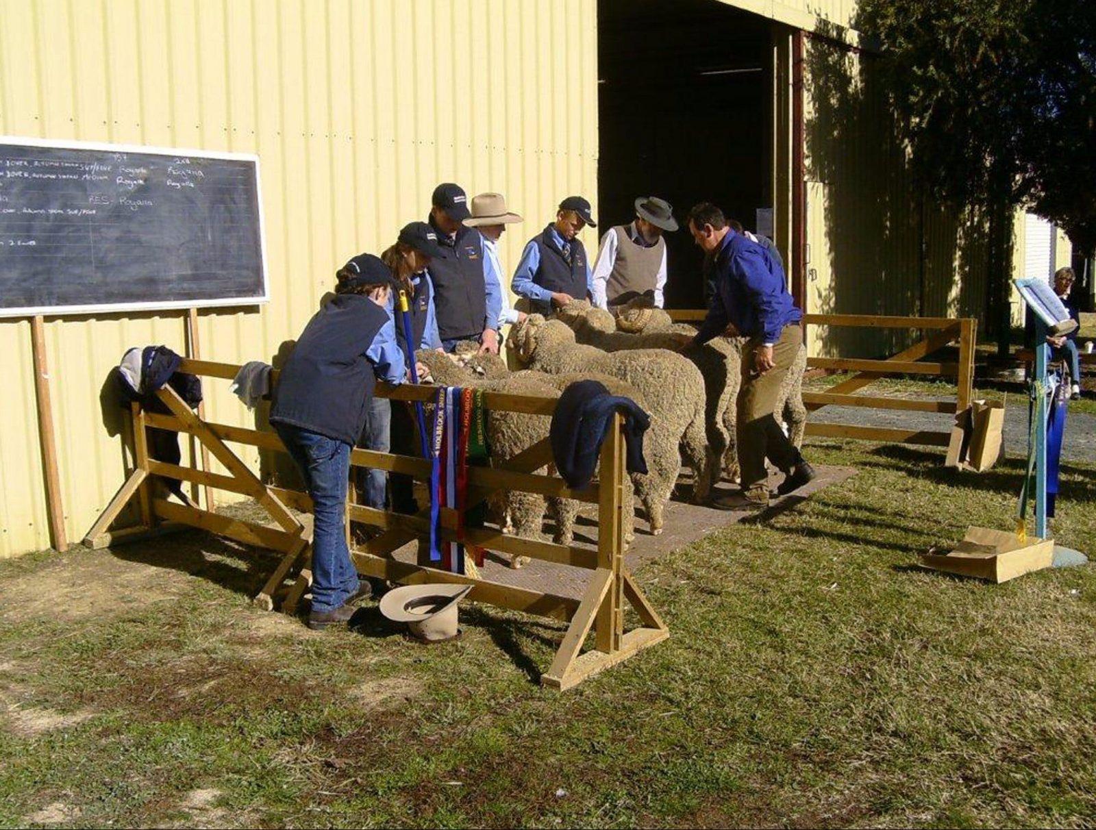 Holbrook Sheep and Wool Fair