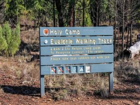 Holy Camp, Weddin Mountains National Park. Photo: C Davis/NSW Government